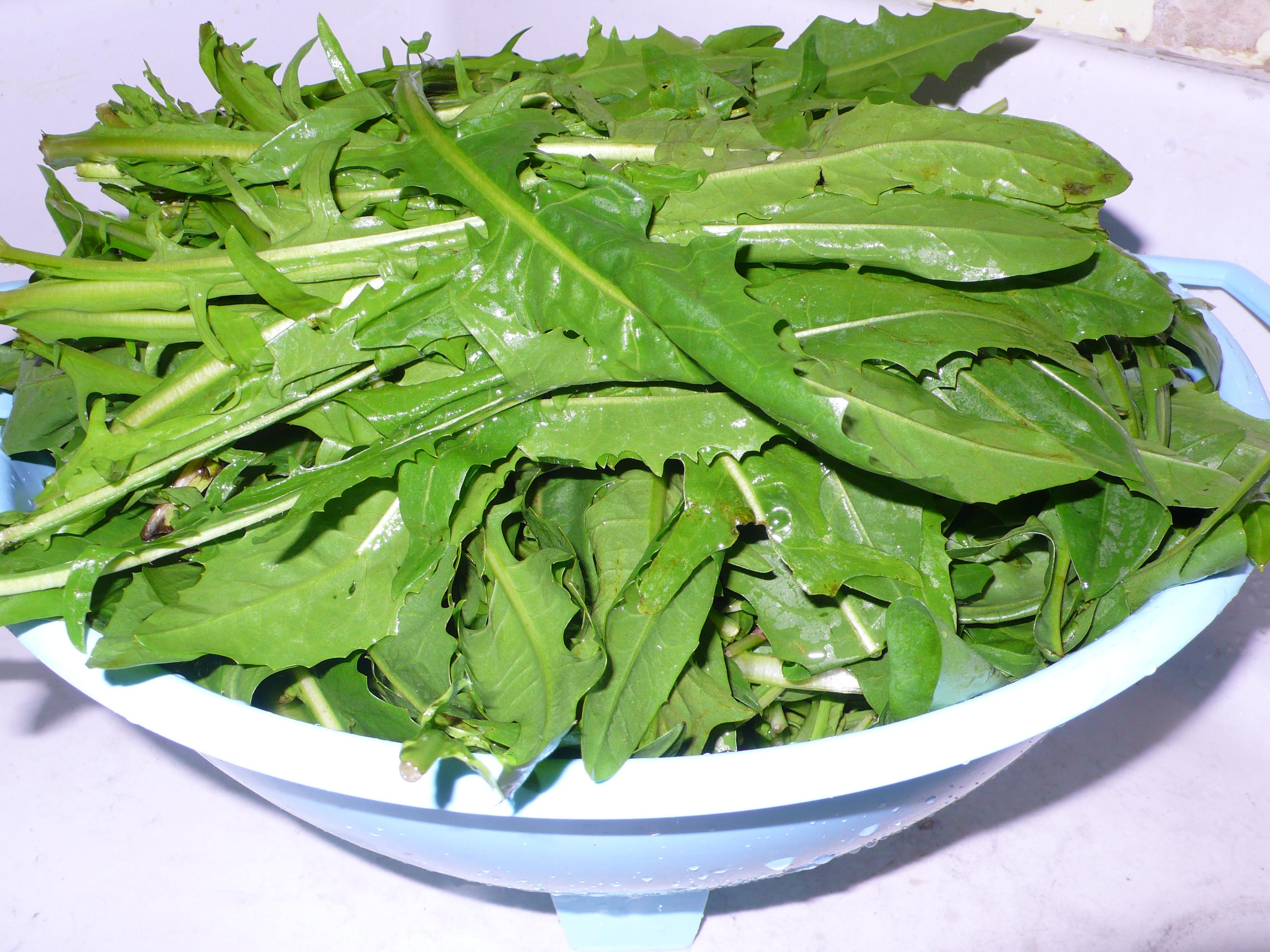 Cicoria saltata in padella italicious for Foto ricette