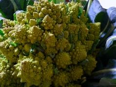 Mezze Maniche con i Broccoli Romani