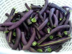 Green Beans alla Napoletana